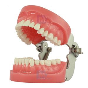 GDC Jaw Set N-Type & Teeth